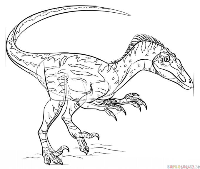 680x575 How To Draw A Velociraptor Step By Step Drawing Tutorials