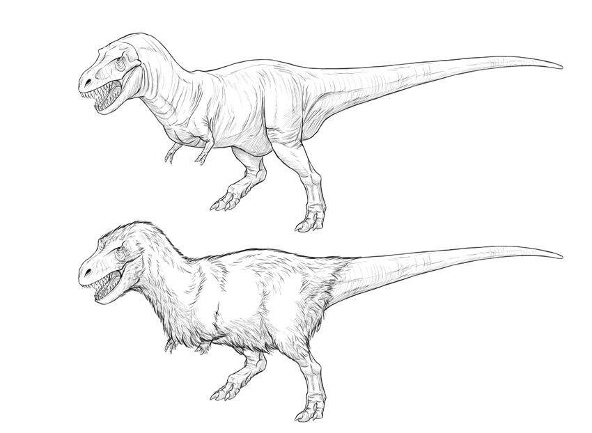 850x622 How To Draw A T Rex Dinosaur