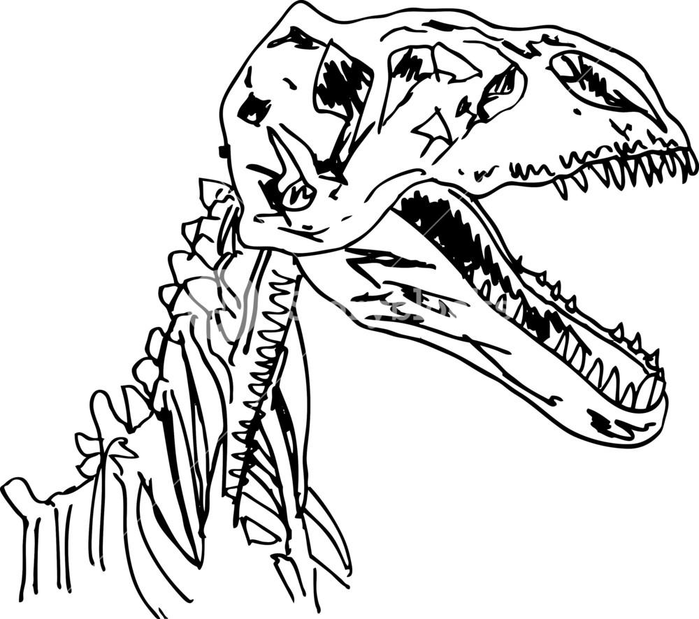 1000x886 Sketch Of Dinosaur Fossil. Vector Illustration Royalty Free Stock