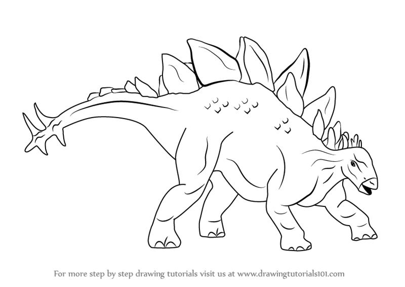 800x566 Learn How To Draw Stegosaurus Dinosaur (Dinosaurs) Step By Step