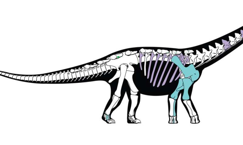 800x480 Egyptian Dinosaur Reveals Ancient Link Between Africa And Europe