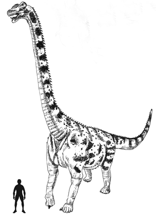 315x431 India's First Dinosaur Fossil Re Discovered
