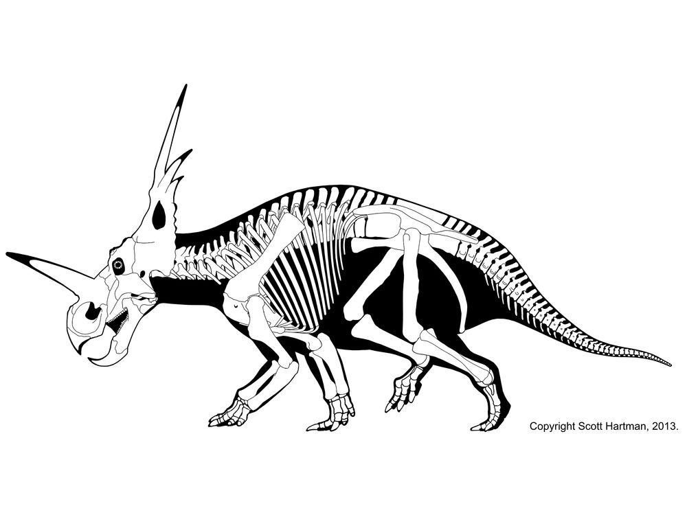 1000x750 Scott Hartman Skeletal Drawing Styracosaurus Albertensis Art