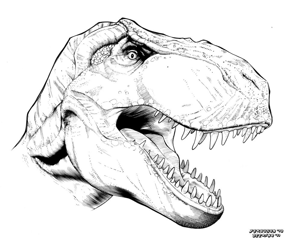 973x820 T Rex Head Drawing Step By Step Step Drawing By Step Canotrus