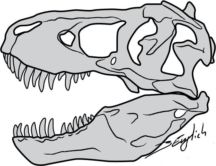 714x550 T Rex Skull Drawing