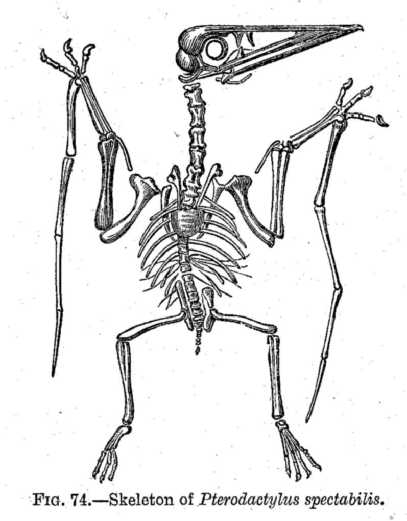 797x1019 Dinosaur Skeletal Reconstruction Prehistoric Animal Bones