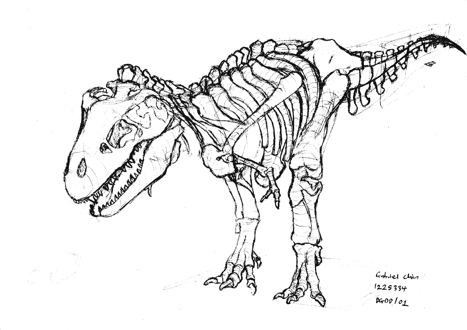Dinosaur Skeleton Drawing at GetDrawings.com | Free for personal use ...