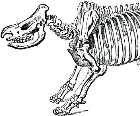 Dinosaur Skeleton Drawing at GetDrawingscom Free for personal use