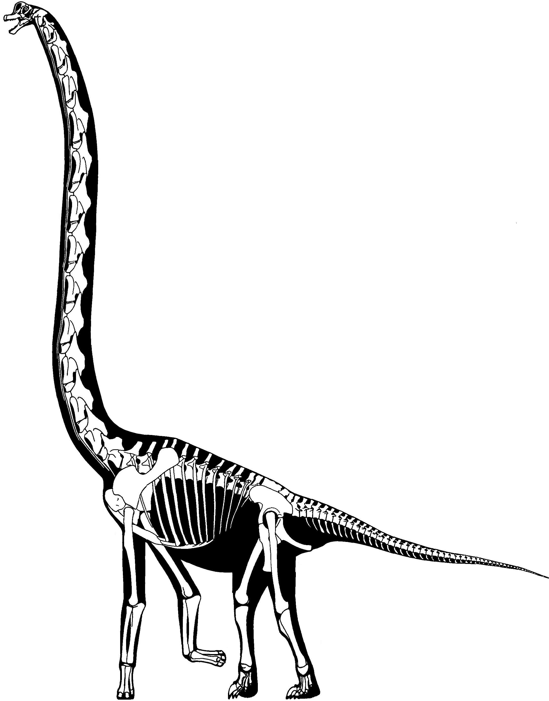 2225x2838 How Tallweird Was Sauroposeidon Sauropod Vertebra Picture