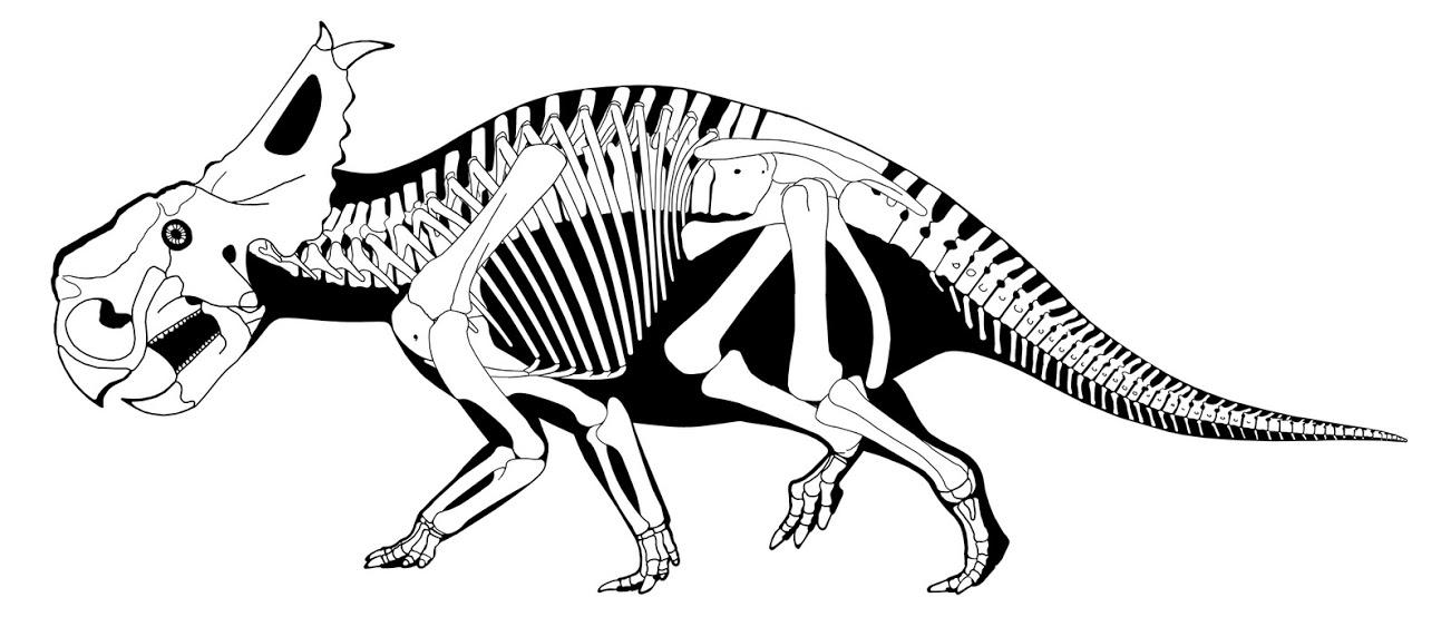 1302x554 Scott Hartman Pachyrhinosaurus Tutorials References