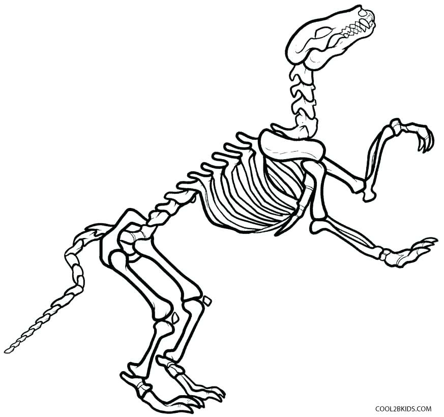 873x820 Skeleton Coloring Page Colouring Pictures Of Dinosaur Skeletons