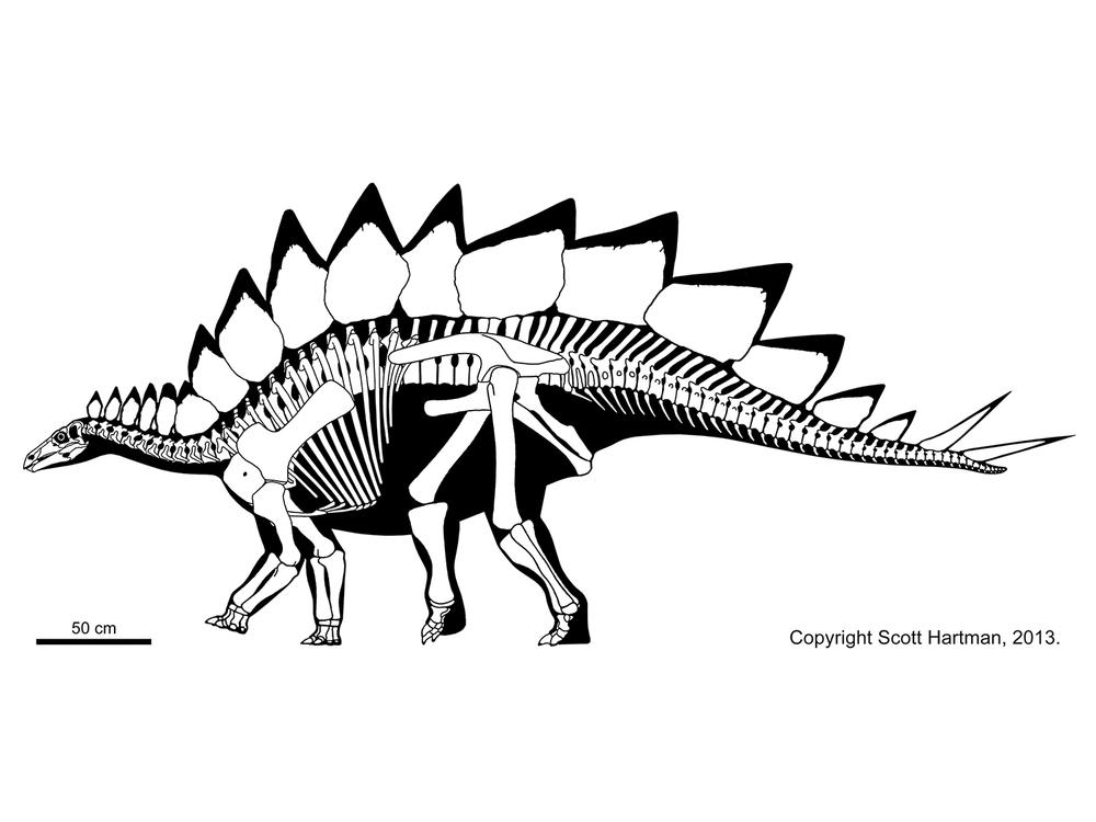 1000x750 Stegosaurus Dinosaurs Prehistoric And Prehistoric