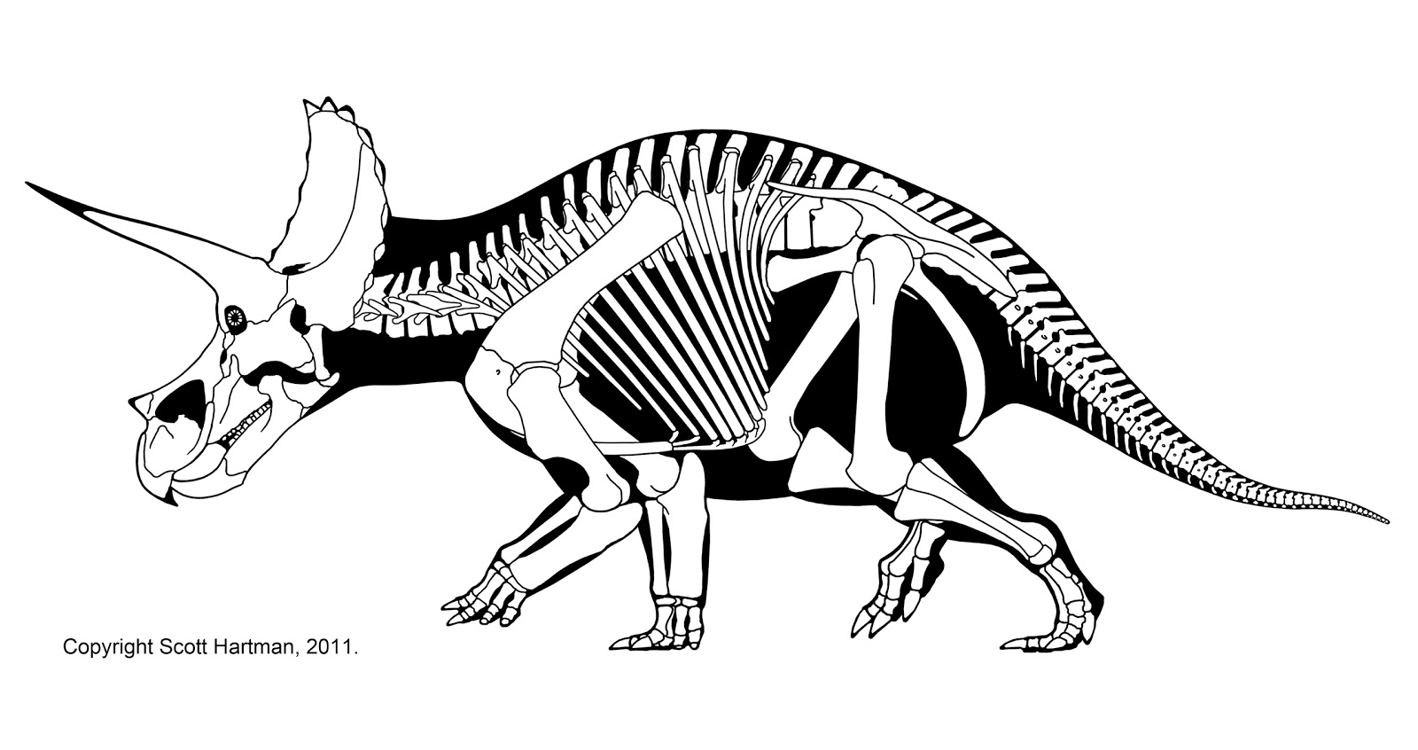 1600x846 The Three Horned Dinosaur Triceratops May Have Had A More Upright