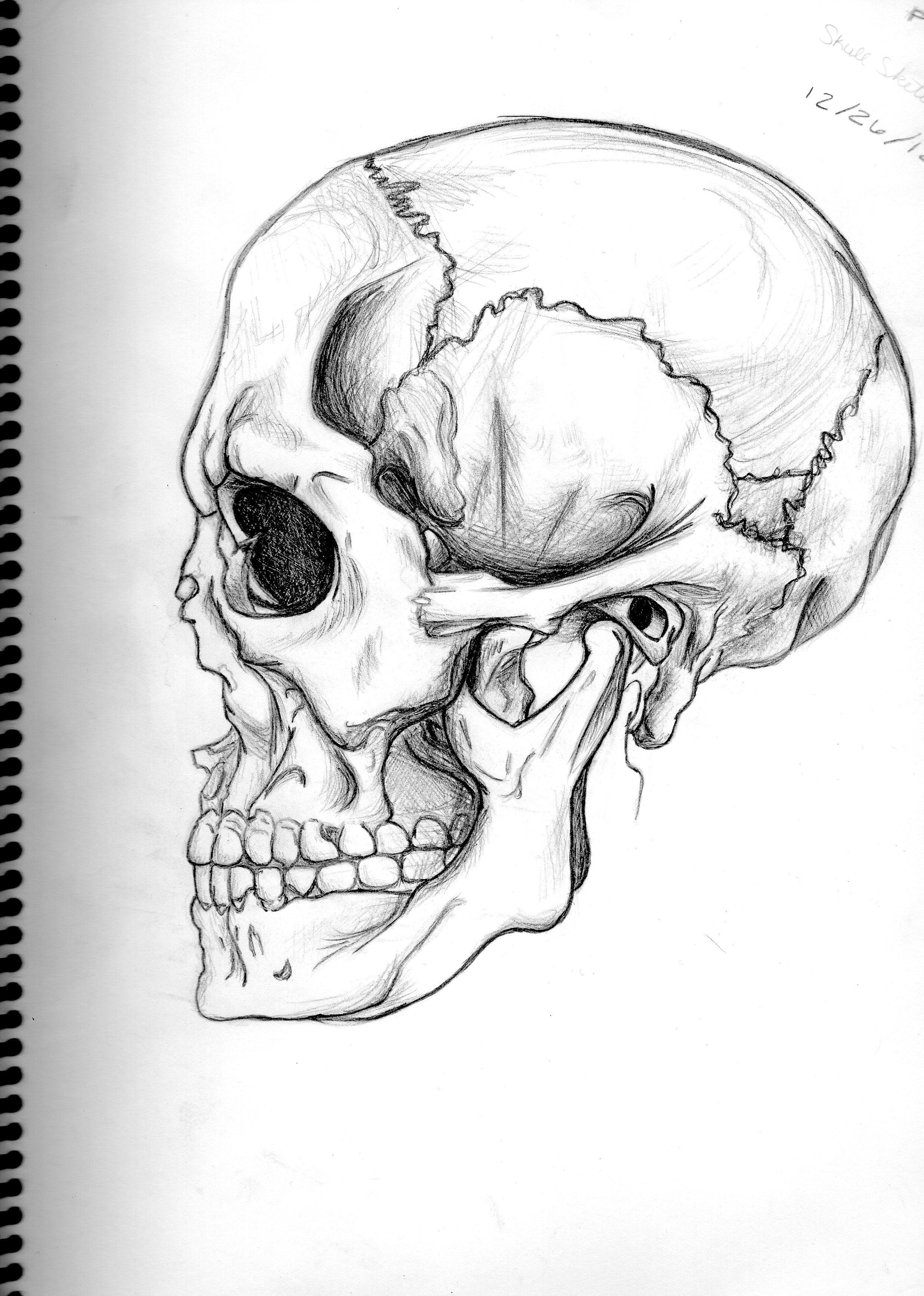Dinosaur Skull Drawing at GetDrawings.com | Free for personal use ...
