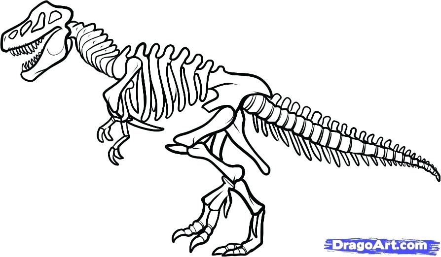 894x522 Bones Coloring Pages Synthesis.site