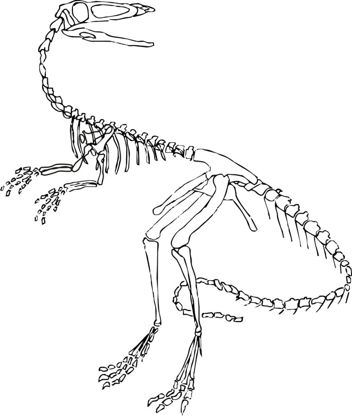 skletal fossil coloring pages-#13