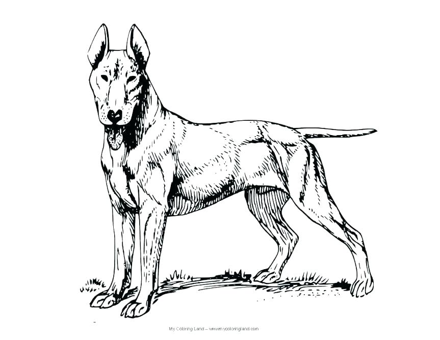 863x667 Dirty Coloring Pages Harry The Dirty Dog Coloring Page Small Eggs