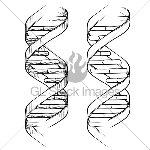 500x500 Dna Double Helix Sketch Gl Stock Images