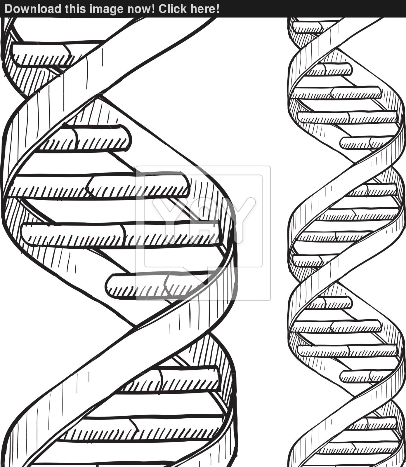 1390x1600 Seamless Dna Double Helix Sketch Vector