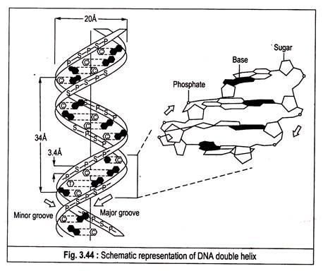 458x384 Dna (Deoxyribonucleic Acids) Plant Physiology
