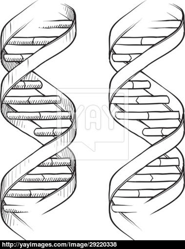 Dna Helix Drawing At Getdrawings Free For Personal Use Dna