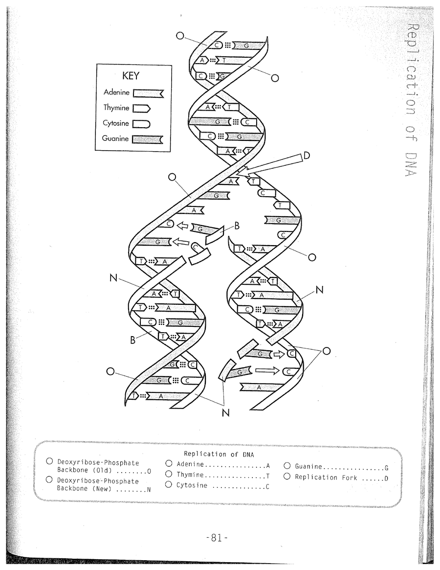 Dna Model Drawing At Getdrawings