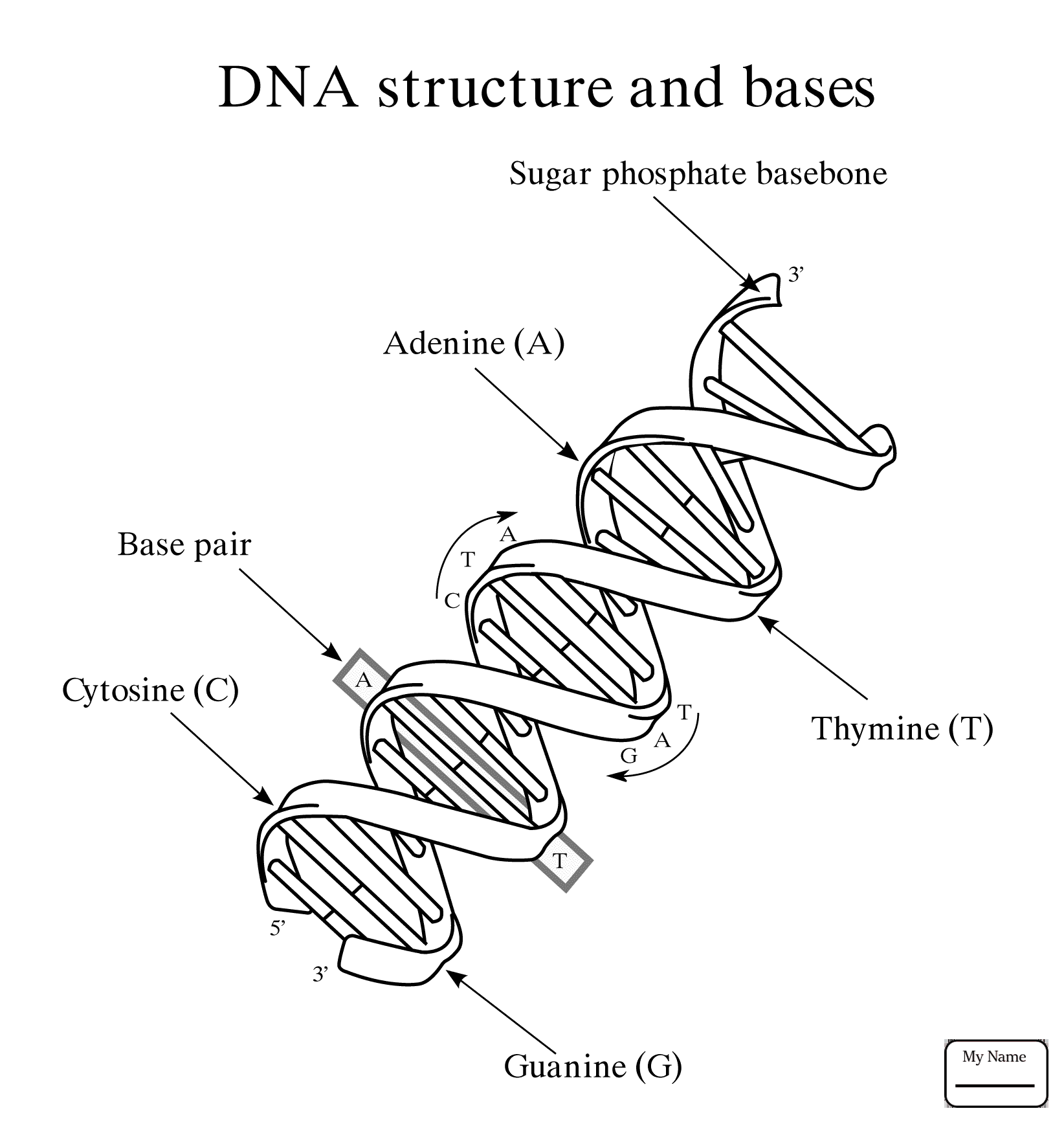 Dna Molecule Drawing At Getdrawings Com Free For