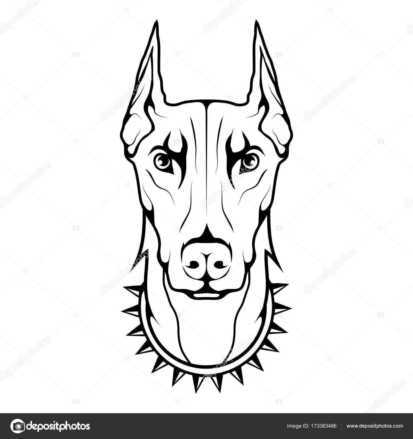 Diagram The Best Free Doberman Drawing Images Download From 139