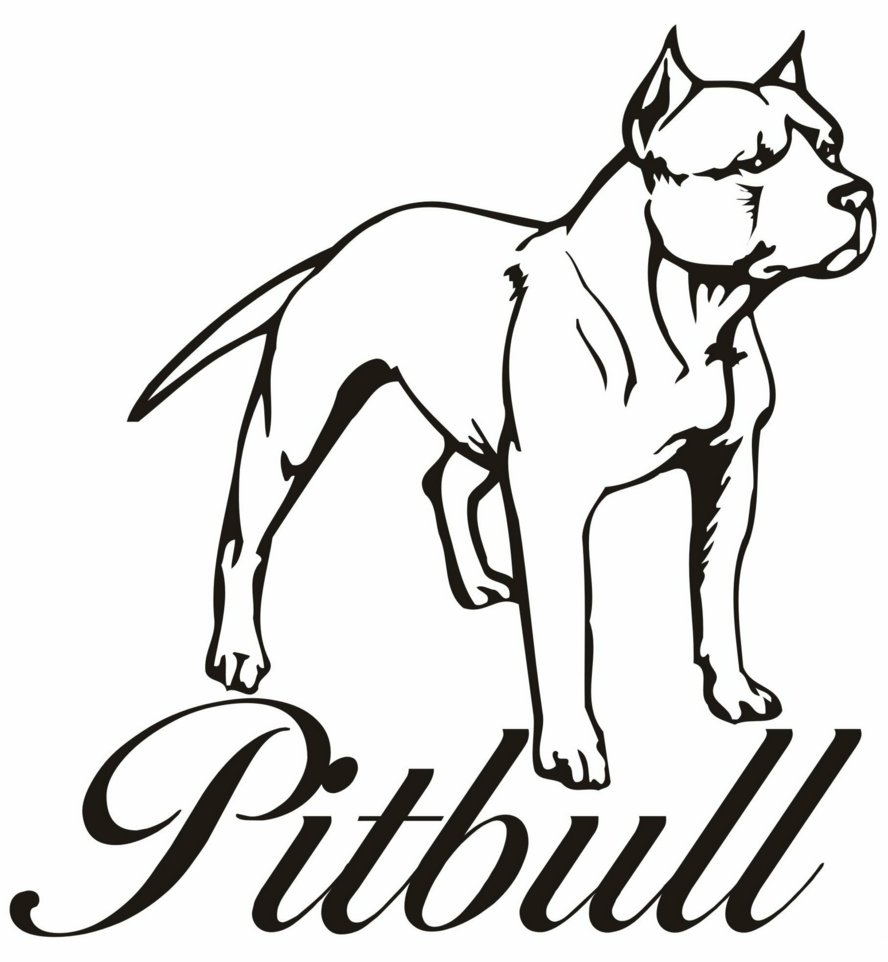 888x962 Pitbull Clipart Coloring Page