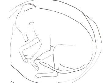 340x270 Illustration Dog Bed Etsy