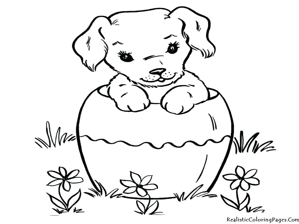 Dog Cat Drawing at GetDrawings | Free download
