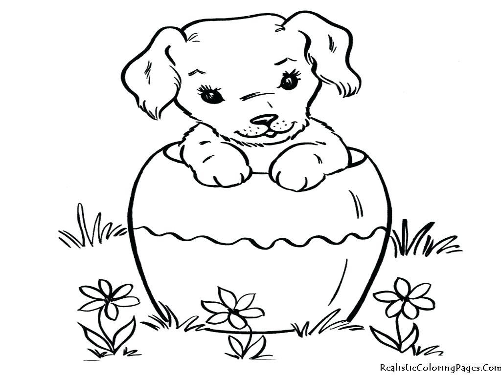 Dog Cat Drawing at GetDrawings   Free download