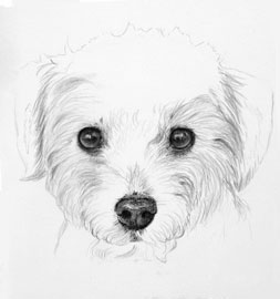 253x270 Custom Graphite Pet Portrait Artist, Wildlife Watercolor Paintings