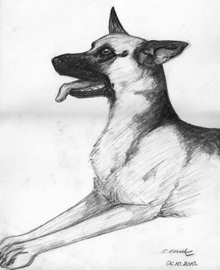 733x900 German Shepherd Dog By Veyf