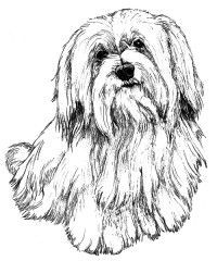 200x240 2159 Best Shih Tzu Rock Images On Dogs, Shih Tzus