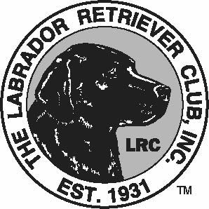 298x298 No To Silver Labs Action Centre Silver Labradors There's No