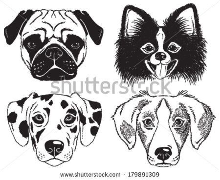 450x369 54 Best Art Dessin Chien Images On Rottweilers