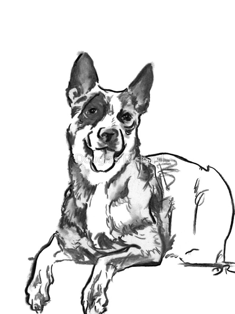 750x1000 Blue Heeler Drawing Iphone Cases Amp Skins By Douglas Rickard