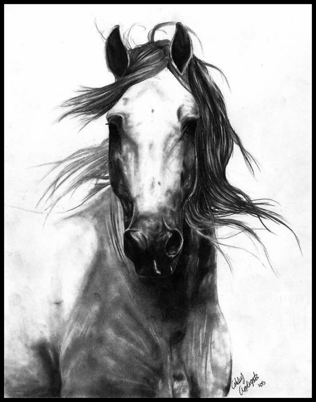 628x800 Charcoal Drawing Of Horse