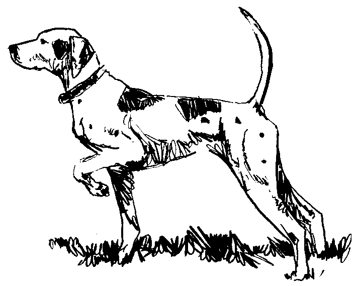704x569 Pointer Dog Clipart Drawing Pointer Dog And Pointers