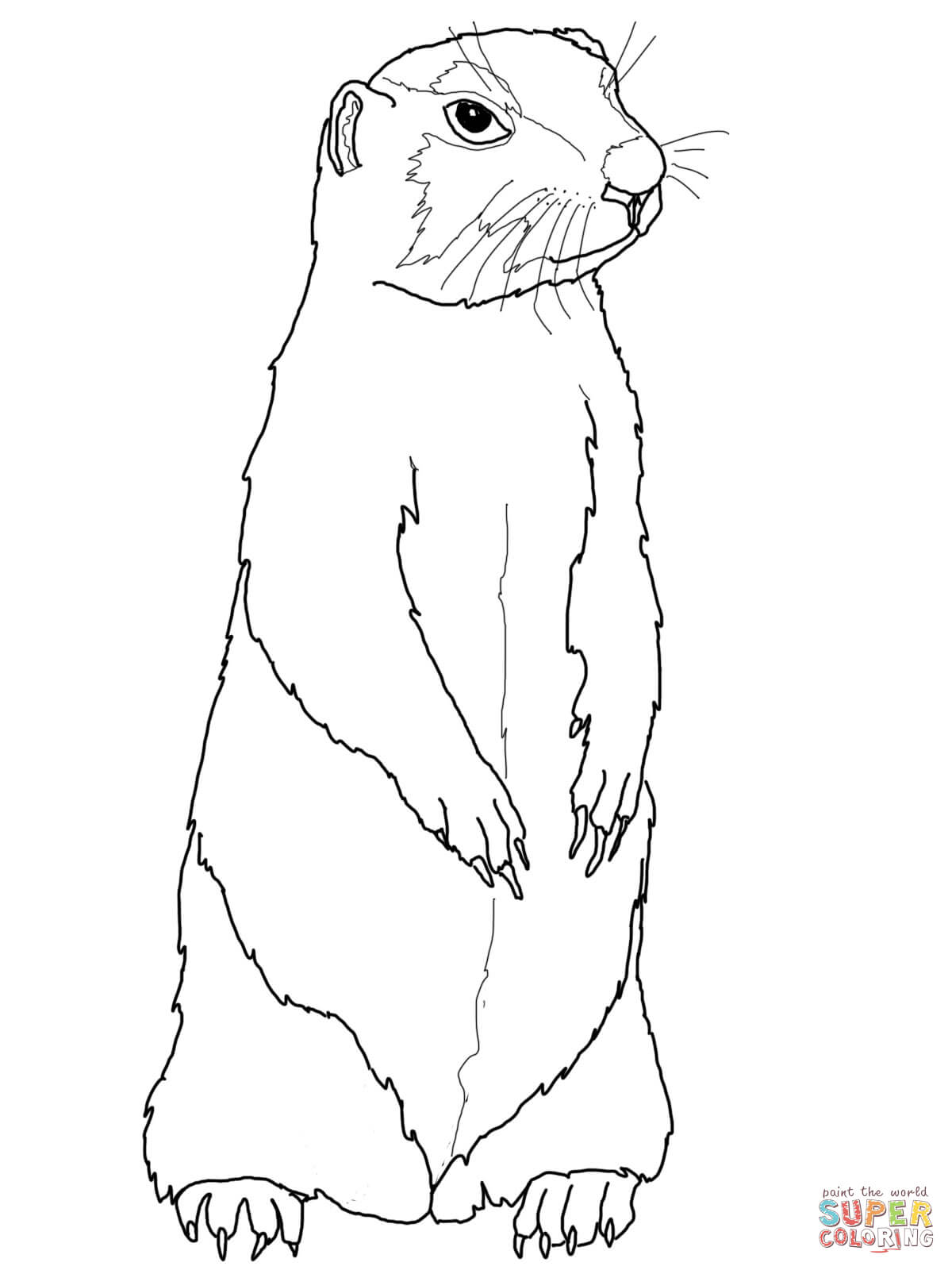 1200x1600 Prairie Dog Clipart Prairie Dog Coloring Page