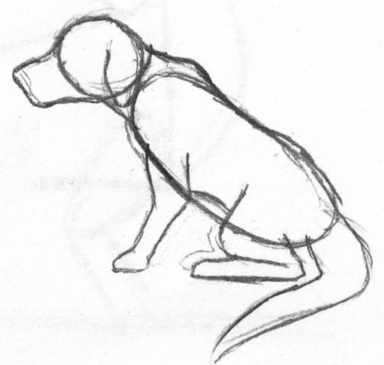 540x513 How To Draw A Dog