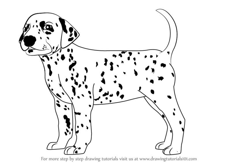800x566 Learn How To Draw A Dalmatian Dog (Dogs) Step By Step Drawing