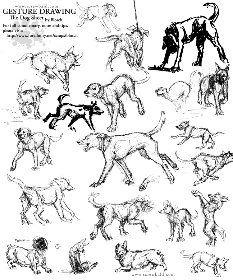 750x900 Gesture Drawing Dogs By Blotch