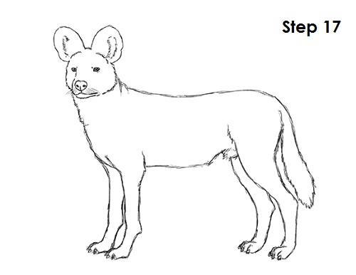 500x386 How To Draw An African Wild Dog
