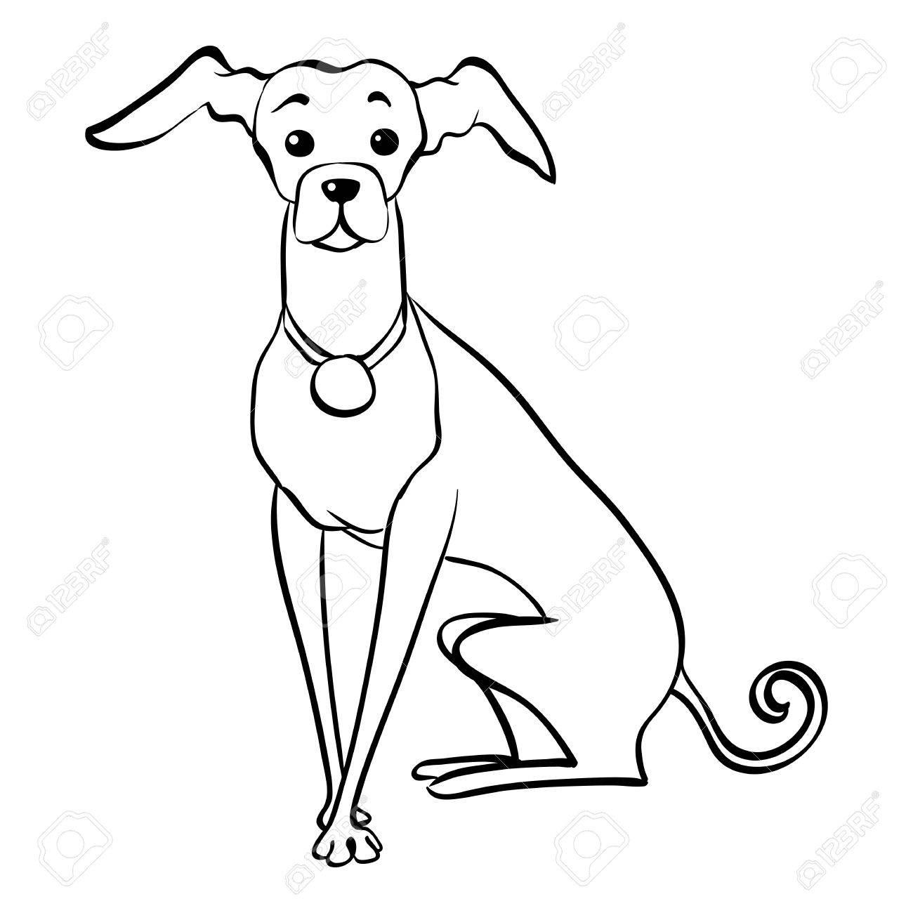 1300x1300 Sketch Funny Dog Italian Greyhound Breed Sitting Hand Drawing