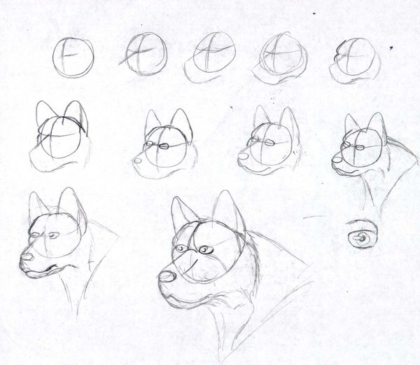 600x521 How To Draw A Dog 1