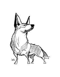 232x300 Australian Cattle Dog Drawings Fine Art America