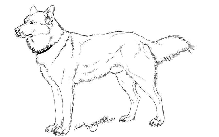 900x563 Free Husky Outline By Whitespiritwolf Recolor