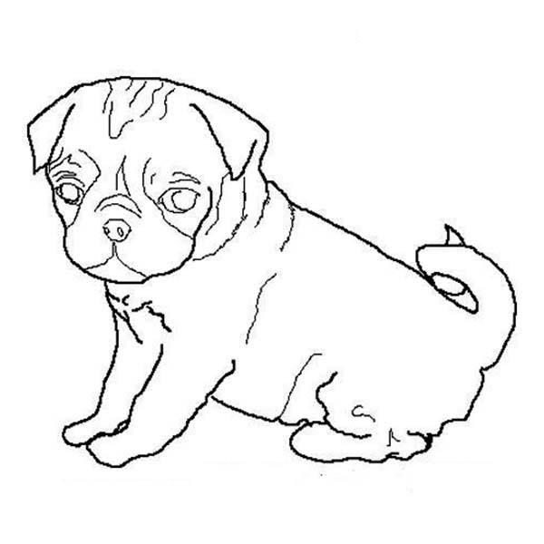 600x600 Pug Dog Outline Coloring Page Color Luna
